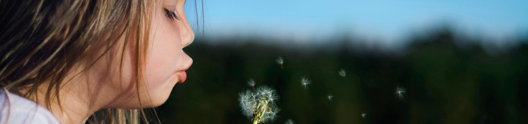 Dandelion-Diap